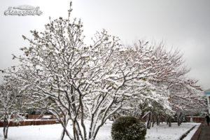 Hàng cây đang rụng lá được phủ tuyết trở nên đẹp lạ lùng
