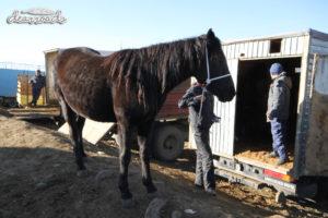 Một chú ngựa khỏe mạnh và chuồng ngựa chính là chiếc xe tải gia đình