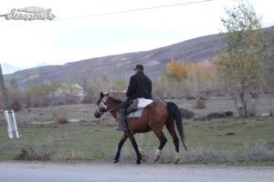 Một anh chàng cưỡi ngựa lùa đàn lùa cừu về nhà