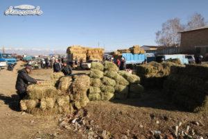 Những đống cỏ dành cho gia súc đang được bán khắp nơi trên những chiếc xe tải đậu bên ngoài chợ