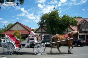 Những chiếc xe ngựa chở khách đi lại trên đường phố